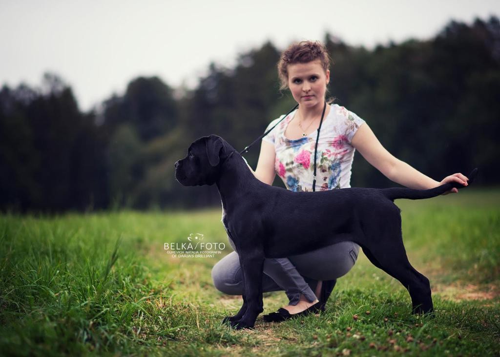 Cane Corso Züchter of Darja's Brilliant Stanley Pat Elegance for Darja's Brilliant